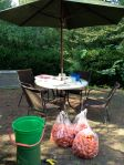 Outside prep: the tomatoes, the wash station, the cutting boards